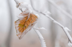 Frozen leaf on snow covered tree branch Royalty Free Stock Image