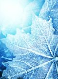 Frozen leaf texture Royalty Free Stock Photos