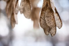 Frozen leaf with on tree branch closeup. Stock Image