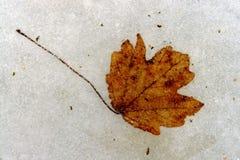 Frozen leaf Royalty Free Stock Photo