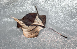 Frozen leaf in water Royalty Free Stock Image