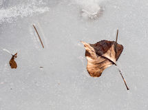 Frozen leaf in water Royalty Free Stock Photos