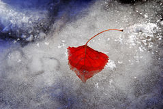 Frozen leaf in winter ice Stock Images