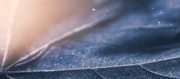 Free Frozen Leaf With Ice Crystals, Winter Nature Background, Banner Royalty Free Stock Image - 171469866