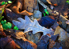 Frozen leafage background Stock Photography