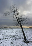 Frozen leafless tree winter snow Stock Photos