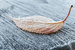 Frozen leave in park Royalty Free Stock Images