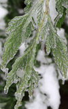 Frozen Leaf Royalty Free Stock Photography