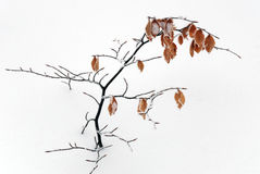 Frozen Leaves Stock Photography