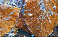 Frozen leaves Stock Photos