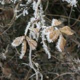 Frozen leaves Stock Image