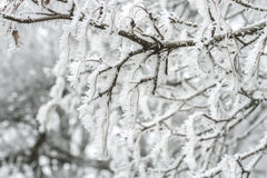 Frozen leaves covered with hoarfrost Royalty Free Stock Photography