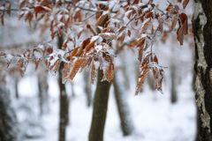 Frozen leaves covered with ice crystals. Winter time Royalty Free Stock Photos