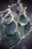 Frozen leaves detail Stock Image