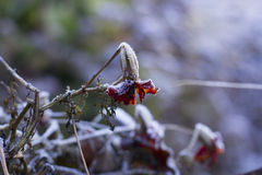 Frozen Leaves and Flower Stock Photo