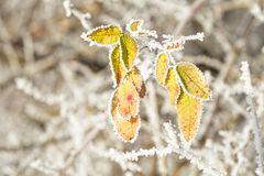 Frozen leaves Royalty Free Stock Images