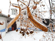 Frozen. Leaves in garden during winter Royalty Free Stock Image