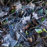 Frozen leaves on the ground in winter mornings background textur Royalty Free Stock Photo