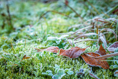 frozen leaves and plants Royalty Free Stock Photography