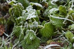 Frozen leaves stock photos