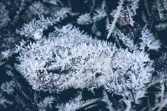Frozen leaves in winter time stock photos