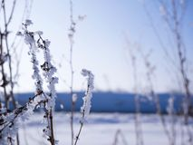 Frozen lifeless dead vegetation at sunset. On a cold sunny winter evening royalty free stock photography