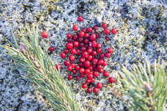 Frozen lingonberries Royalty Free Stock Images