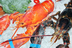 Frozen lobster Royalty Free Stock Photos