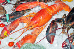 Frozen lobster Royalty Free Stock Photo