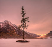 Frozen. Lone tree on a stone in the lake Hintersee Stock Images