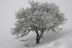 Frozen lonelyness Royalty Free Stock Image