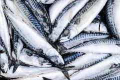 Frozen mackerel. Frozen group of fish. iced atlantic fish. Mackerel. Mackerel pattern. Mackerel texture.  royalty free stock images