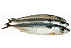 Frozen mackerels Stock Photos