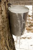 Frozen Maple Syrup Royalty Free Stock Images