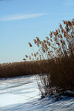 Frozen marsh.  Stock Photos