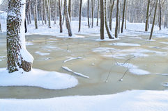 Frozen marsh Royalty Free Stock Photography