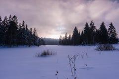 Frozen Marsh Stock Photo