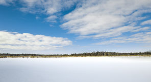 Frozen Marsh Land In Winter. With blue sky and clouds cattails wetlands Stock Photos