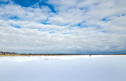Frozen Marsh Land In Winter. With blue sky and clouds cattails wetlands Stock Images