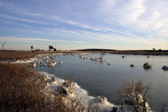 Frozen Marsh Royalty Free Stock Image