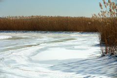 Frozen Marsh and Wetlands. A view of tall marsh grass and icy wetlands in winter Royalty Free Stock Photography