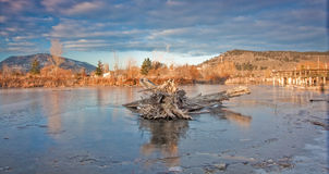 Frozen Marshes. Found in downtown Kelowna Royalty Free Stock Photos
