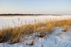 Frozen Marshland Stock Photography