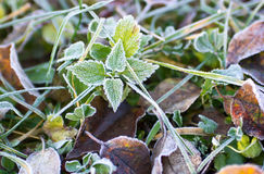 Frozen meadow Royalty Free Stock Image