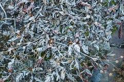 Frozen Meadow Stock Photos
