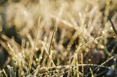 Frozen meadow grass Stock Photo