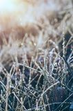 Frozen meadow grass Royalty Free Stock Images