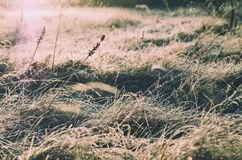 Frozen meadow grass Royalty Free Stock Image