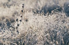 Frozen meadow grass Stock Photography