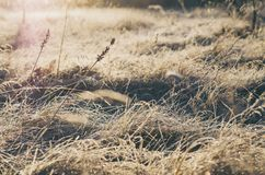 Frozen meadow grass Royalty Free Stock Photos
